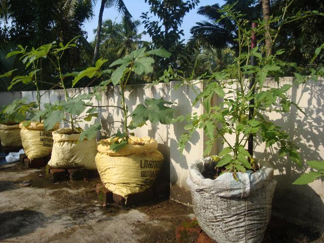 Organic micro farm and vegetable terrace garden for Terrace garden in india