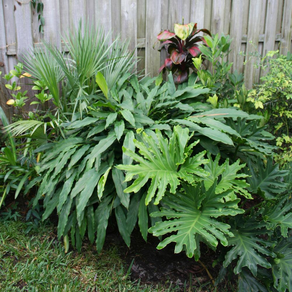 The Rainforest Garden Why I Plant Densely