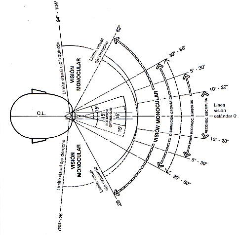 Proceso de dise o arquitect nico de un centro de for Antropometria y ergonomia en arquitectura