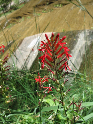 Flower along Virgin River Zion National Park Utah