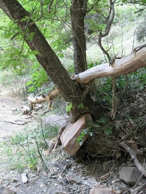 Log jam along Virgin River Zion National Park Utah