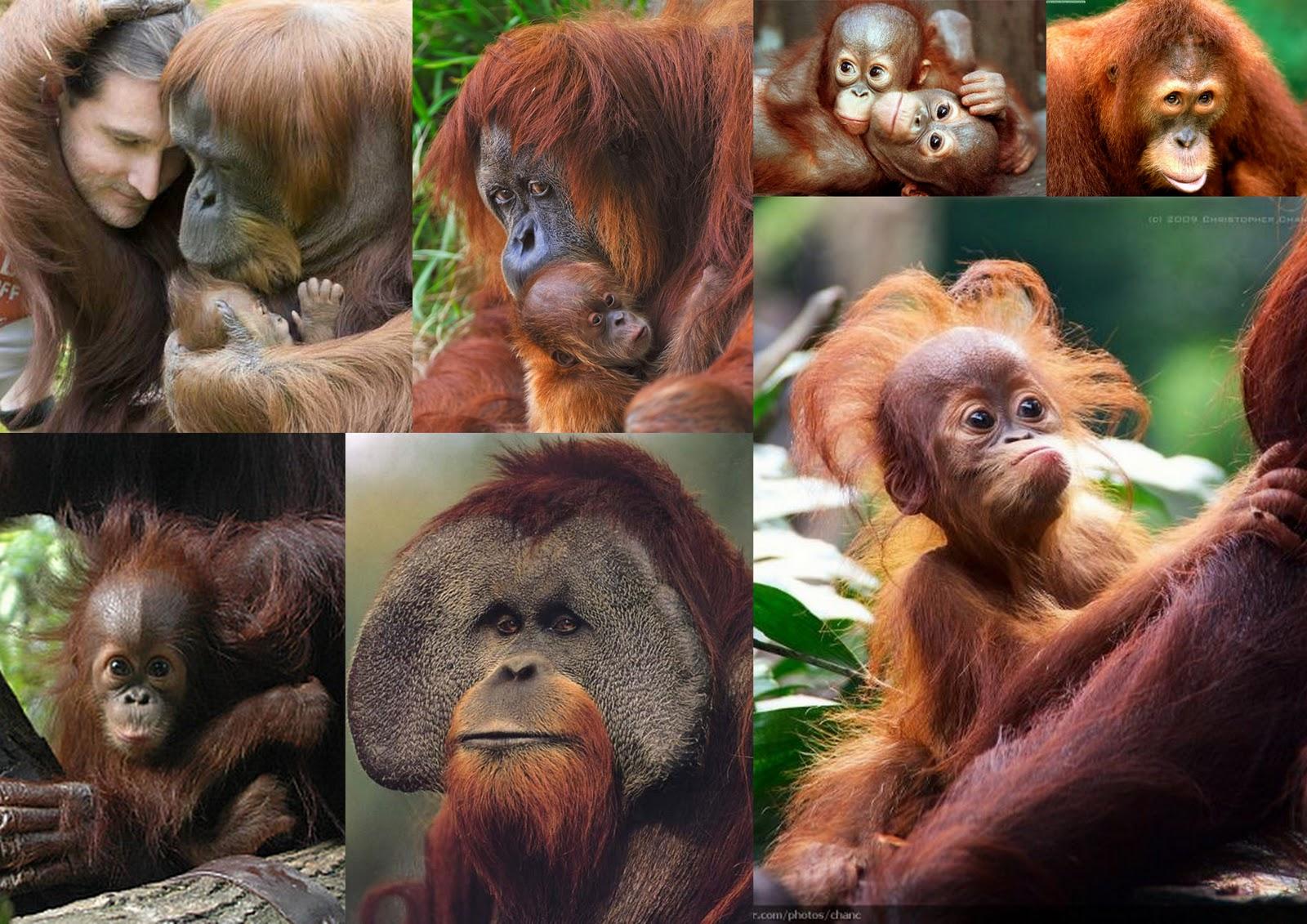 Sex xxx orangutan smut images