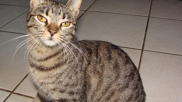 df64f1e75 ... gato do vizinho. E Sushi é mais carinhosa, fica à vontade pela casa e  adora me amassar quando eu estou no sofá ou deitada na cama.