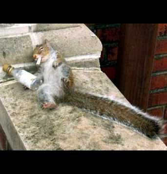 Squirrel Needs a Stimulus