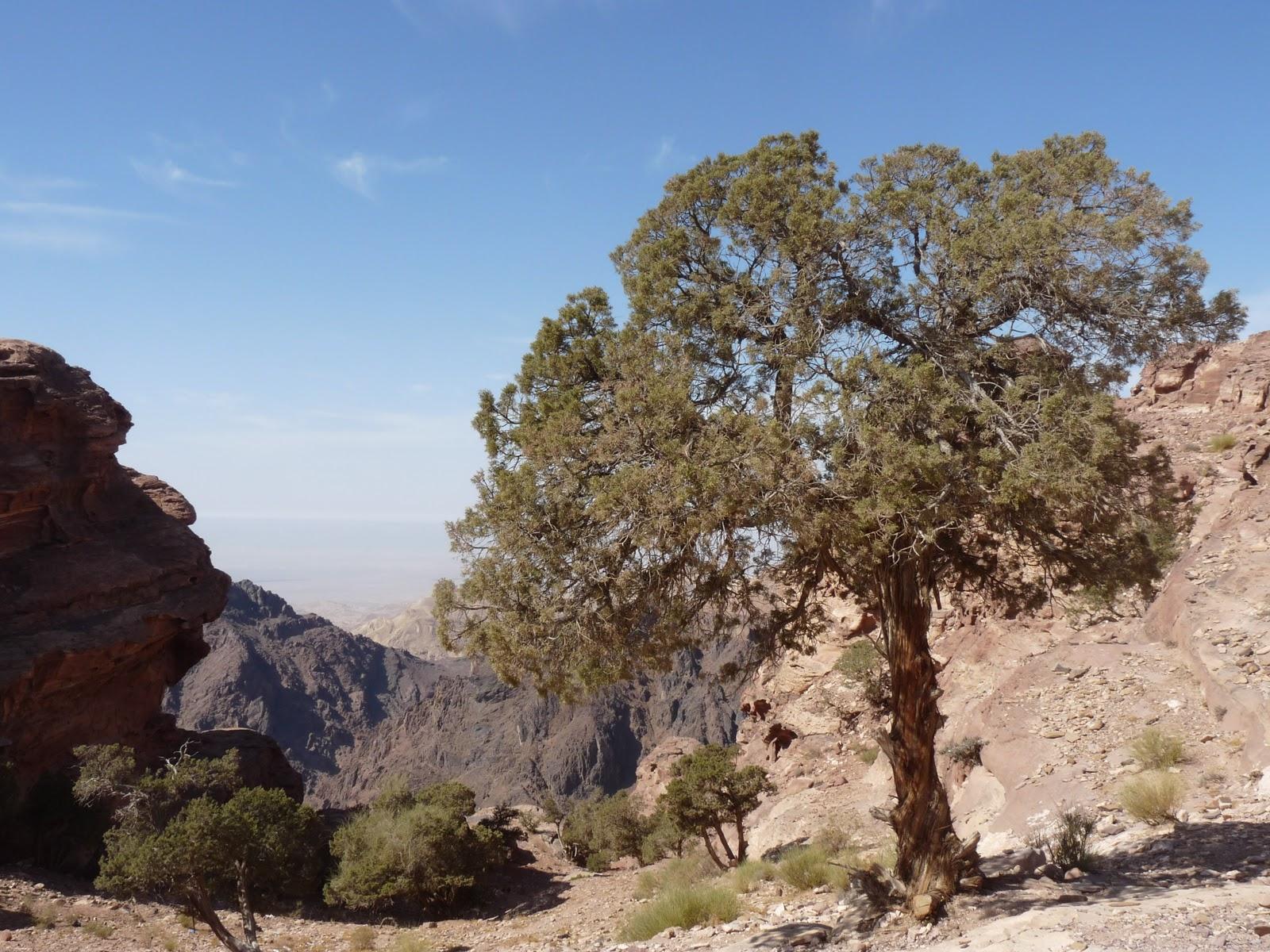 Pension lawyer meets world: Petra, Wadi Rum and Aqaba