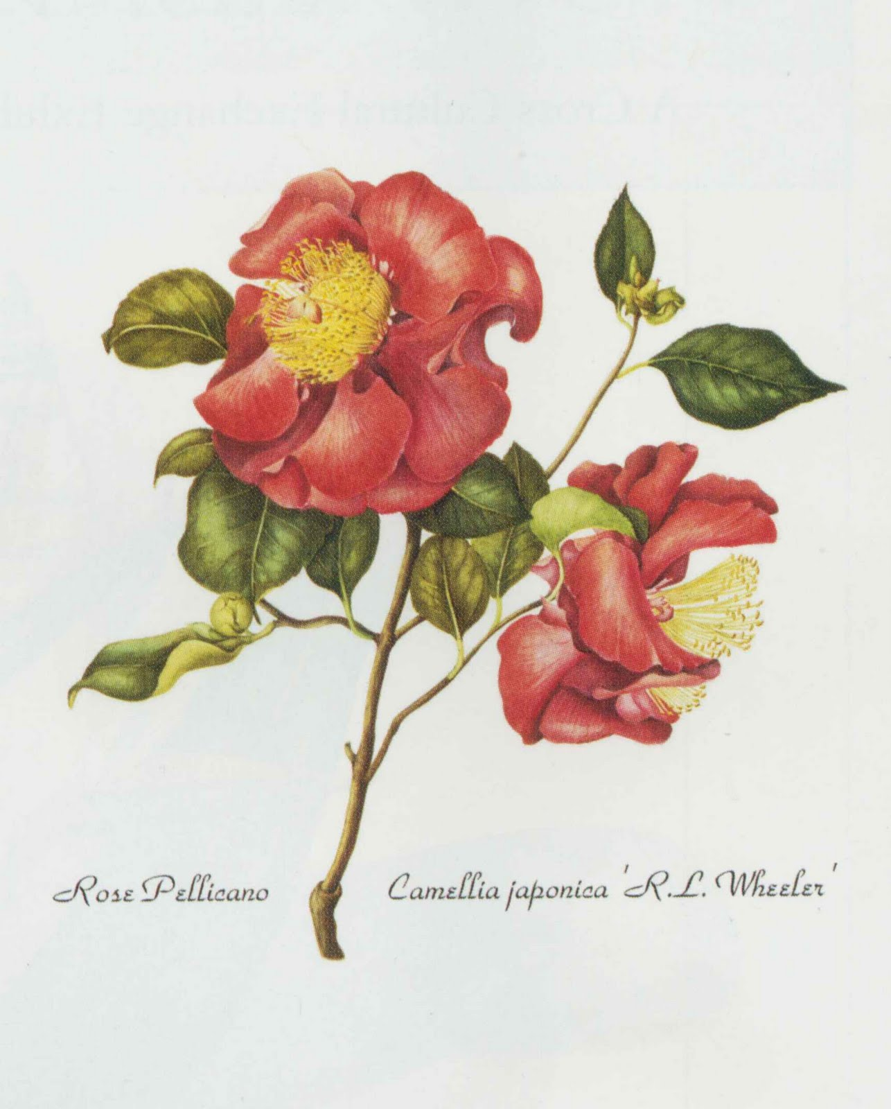 Westbury Gardens Rose Garden: Old Westbury Gardens:Blog Garden: Botanical Art Exhibit