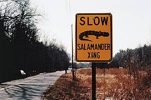Salamander Crossing Sign, Source: US Department of Transportation, Federal Highway Administration