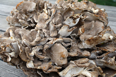 <i><b>Hen of the Woods!</i></b>...foraging for nature's Autumn bounty.