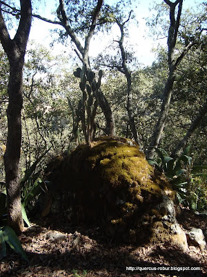 Vegetación entrando a la pendiente que da a la cañada en Cerro Viejo
