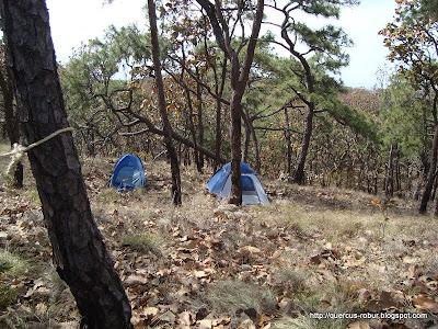 Campamento - Casa de campaña