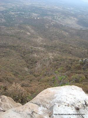 Vista que tienen los zopilotes en el Cerro los Bailadores