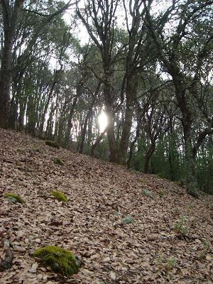 Vista en la costilla del Cerro Viejo