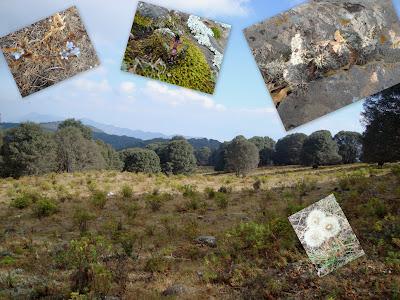 Flora y Fauna vista en el Cerro Viejo
