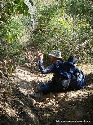 En el bosque subcaducifolio con  pendientes mayores a 20°