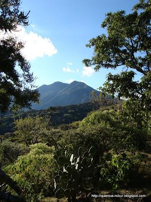 Vista del segundo Picacho  en el Cerro Grande de Ameca