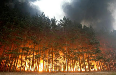 Forest Fire - Dolginino, Russia (Aug. 2010)