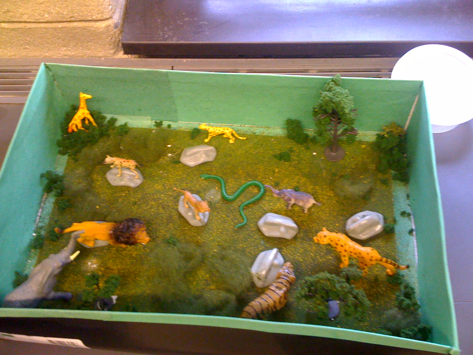 Images of Desert Ecosystem Diorama - #rock-cafe
