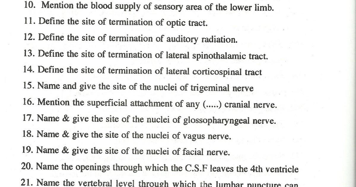 ANATOMY section: Questions: Neuroanatomy