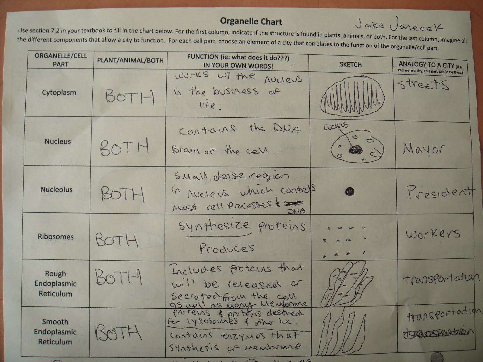 Period 8 Sts Bio Scribe Post For October 4th