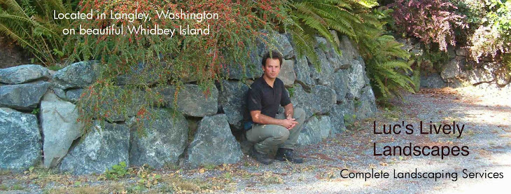 Lively Landscapes Portfolio Of An Artist On Whidbey Island
