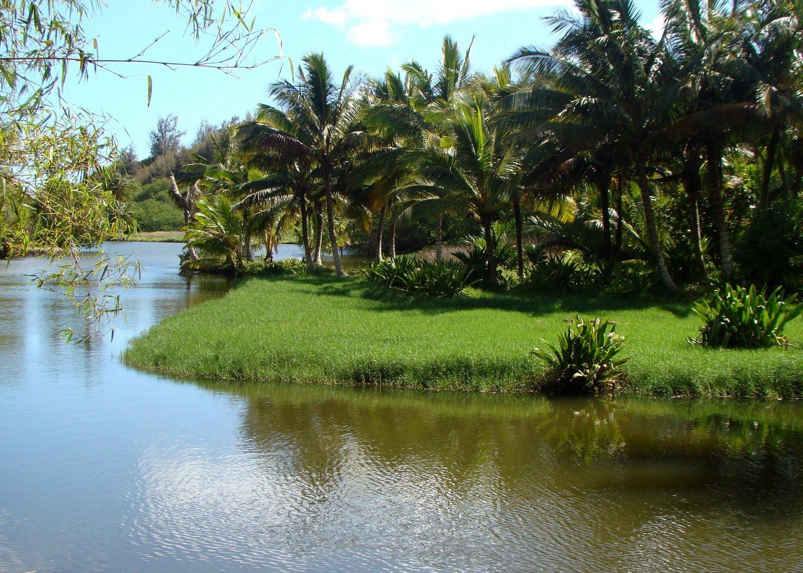 National tropical botanical garden kauai - National tropical botanical garden ...
