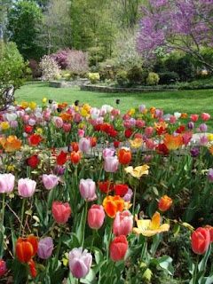 A Tulip Daffodil Garden to Inspire You