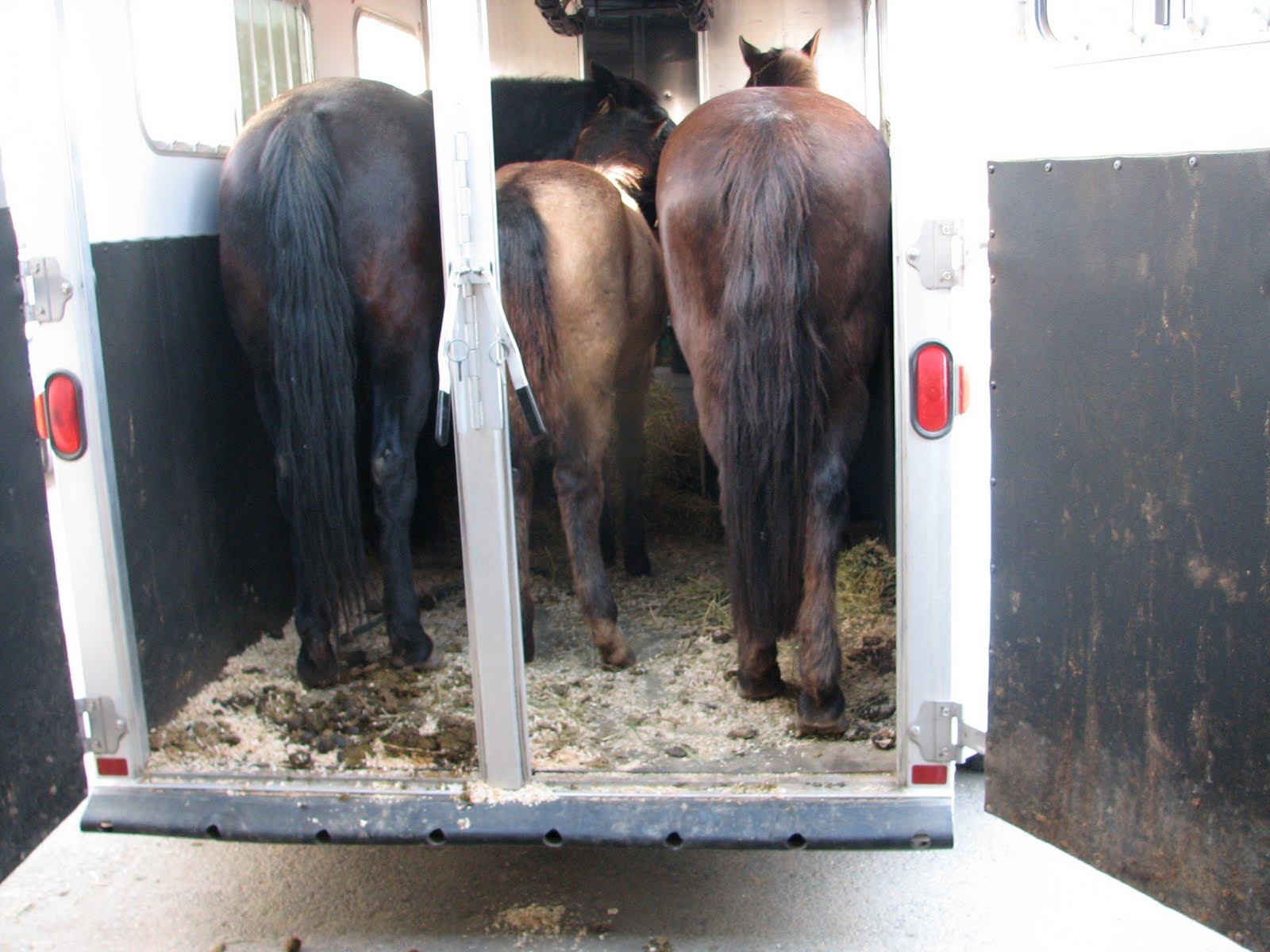This Equestrian Life: How to Squeeze Three Horses into a Two