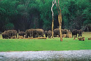 Elephants at Kerala