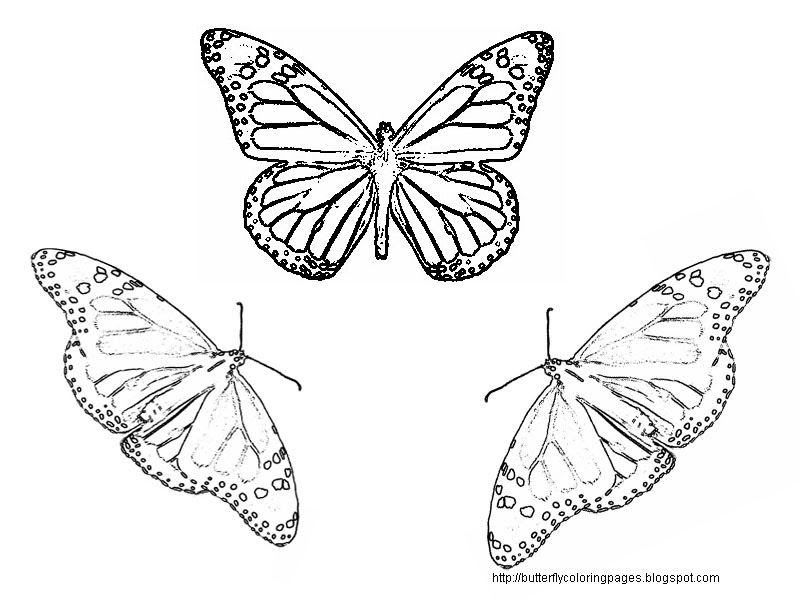 Monarch butterfly coloring pages butterfly coloring pages for Monarch butterfly coloring page