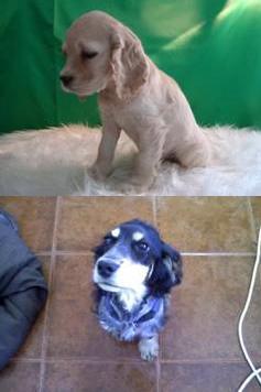 Ora Bolas de Pelo  Cães de Raça 3b8ff63bc934a