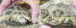 Anatomical Difference of a Male and Female Tortoises