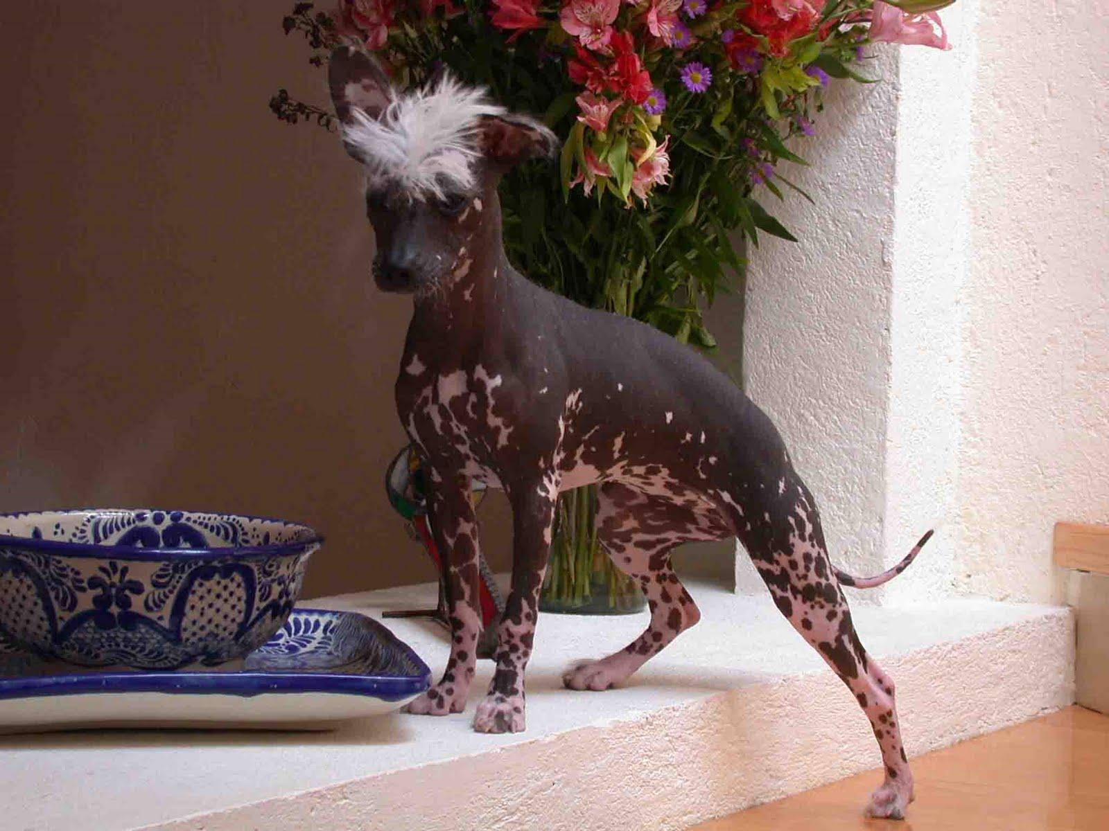 Solitary Dog Sculptor ...