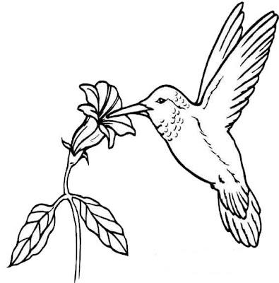Buscas Rápidas Desenho De Beija Flor Para Pintar Desenhos