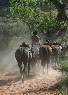 horses along a trail in Zion National Park
