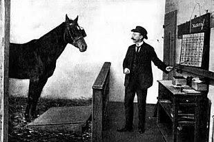 Clever Hans, il cavallo che sapeva contare
