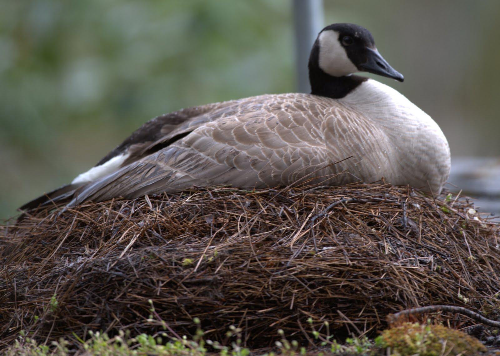 Clearlyconfused Farm House Progress And Random Birds