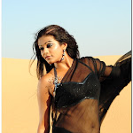 Priyamani Hot Sexy Photo Gallery Wallpapers