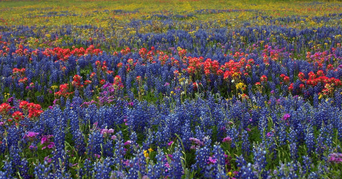 Glass Touch Tip Toe Through The Texas Wildflowers