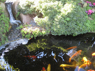 Koi Pond at Self-Realization Fellowship