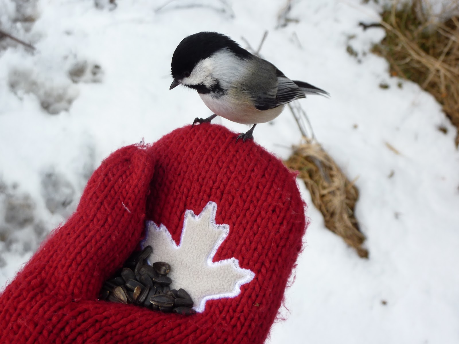 Nature Canada Connect With Nature Prepare Your Yard For