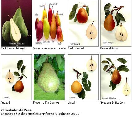 Frutales generalidades el mundo y sus plantas for Tipos de viveros frutales