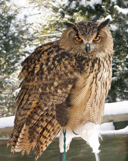 The Goddess Touch: owls