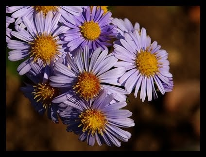 Kazde Zdjecie Jest Wspomnieniem Cytaty O Kwiatach