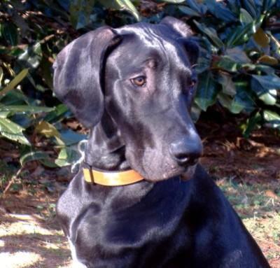 Top Dog Blog!: Basic Breed Information – 3