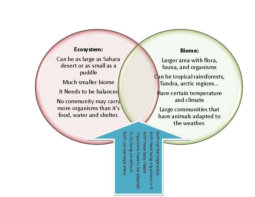30 Primary And Secondary Succession Venn Diagram