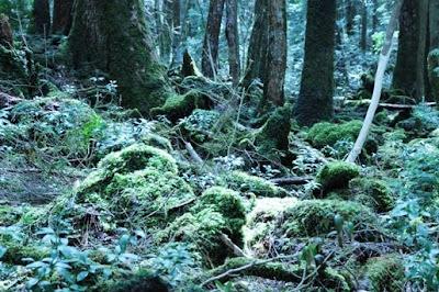 夜更かしウォーカーのフォト日記: 青木ヶ原樹海
