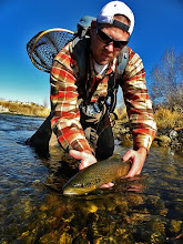 Weber River Brown Trout