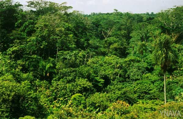 Plantas De Selva Alta: Ecosistemas Mexicanos: Selva Alta Perennifolia