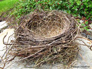 Abandoned Bird's Nest