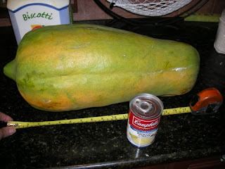 mother of all papayas